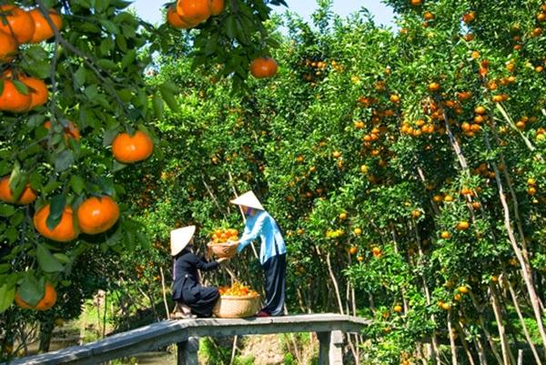Du lịch Miệt Vườn tại vườn trái cây Phong Điền